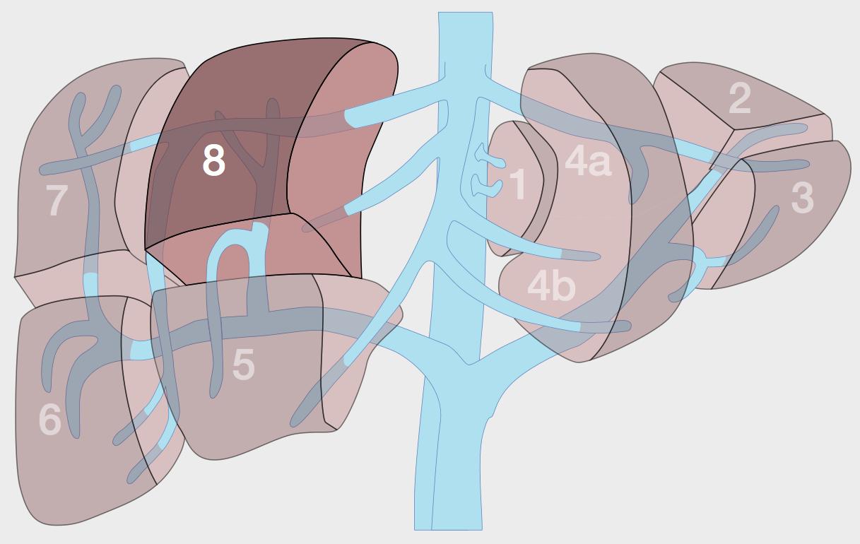 liver segments
